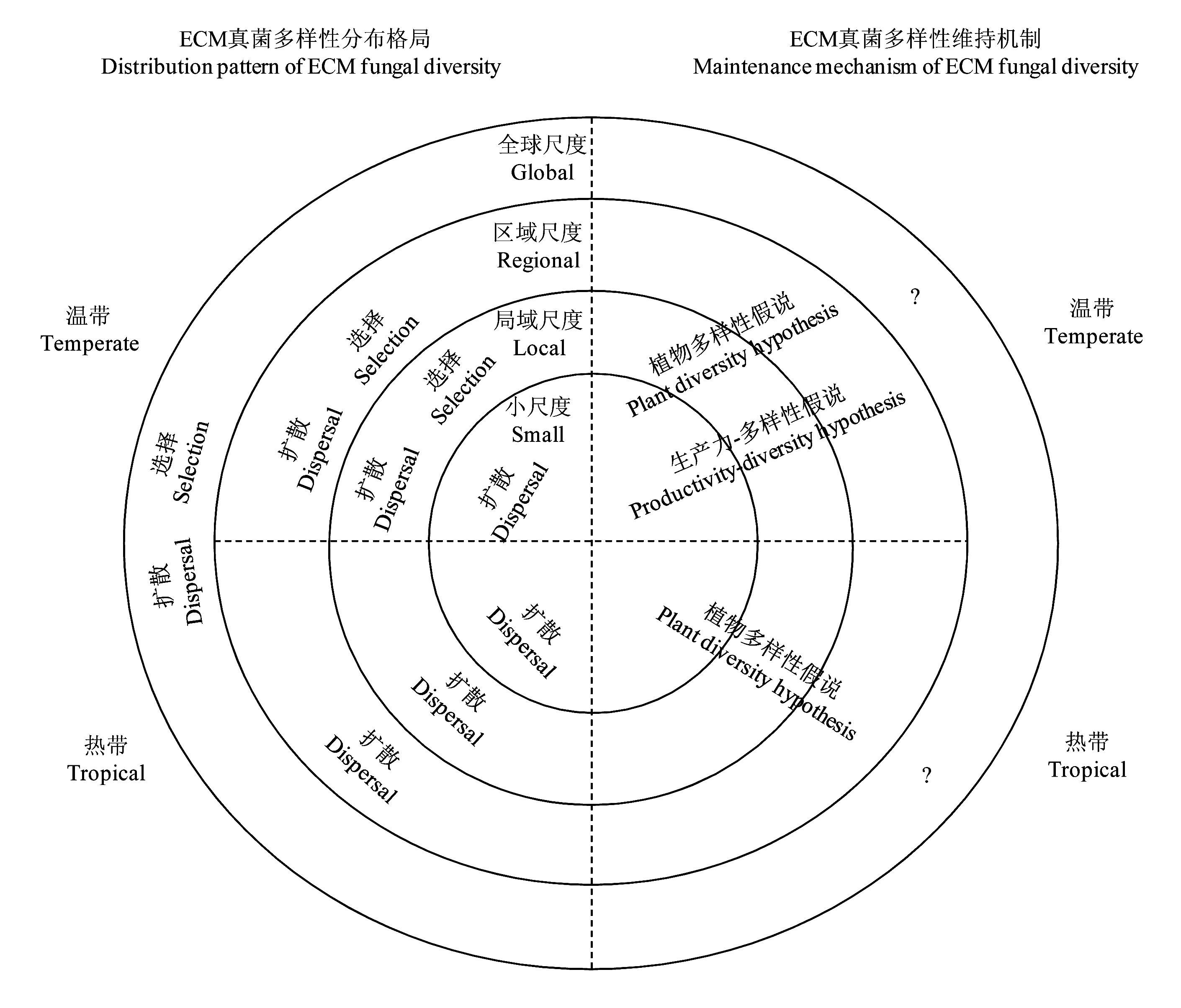 Distribution pattern and maintenance of ectomycorrhizal