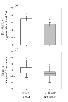 Effects of nectar robbing on pollinator behavior and
